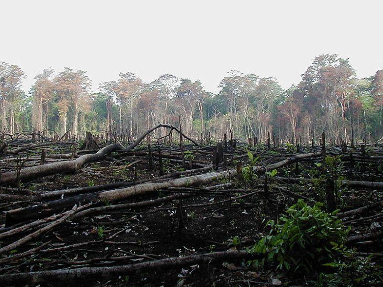 Recent Deforestation