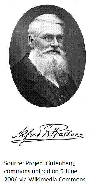 an analysis of the role of alfred russel wallace This educational website explores the life and ideas of alfred russel wallace,  wallace's life and significance wallace and intelligent design wallace and.