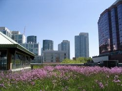 MEC's green roof among others by sookie (Flickr) [CC-BY-2.0 (http://creativecommons.org/licenses/by/2.0)], via Wikimedia Commons