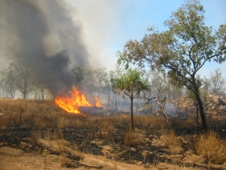 Bushfire in Kakadu National Park, Northern Territory, Australia by Thomas Schoch.  This file is licensed under the Creative Commons Attribution-Share Alike 2.5 Generic license