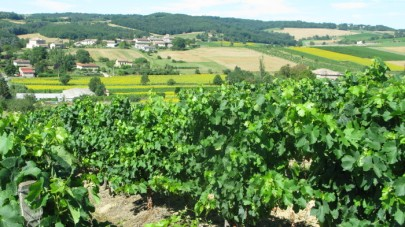'Terroir' near Castelnau de Montmiral, South West France
