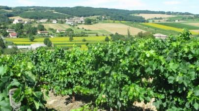 'Terroir' near Castelnau de Montmiral, South West France