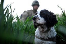 Dogs are valuable military team members Source: Wikimedia Commons
