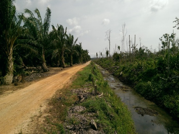 A palm oil plantation (left) borders a degraded peat forest swamp in South Selangor, Peninsular Malaysia. Source: (c) Rory Padfield.