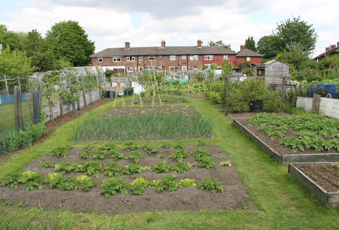 LP allotment pic.jpg